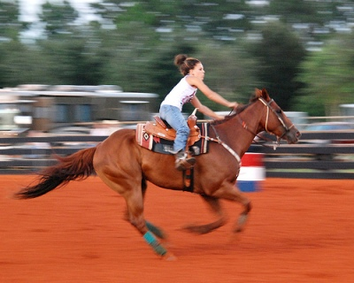 foto panning kuda