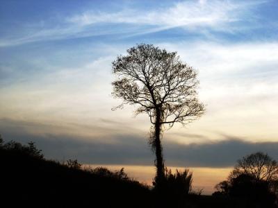 tree's silhouette