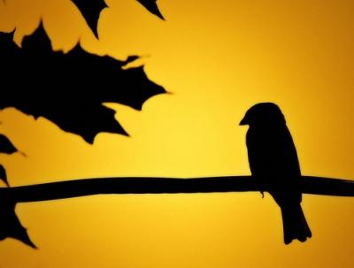 siluet burung dan daun