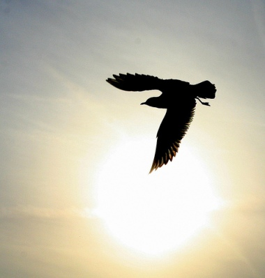 foto siluet burung